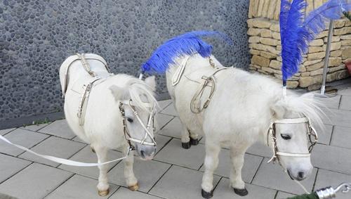 Cinderella's pantomime ponies at Aylesbury Waterside - ATG Blog