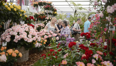 Rhs chelsea flower show royal hospital atg tickets - Royal flower show ...
